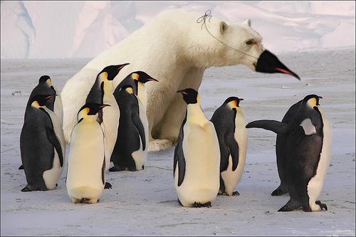 Google Penguin Update 2