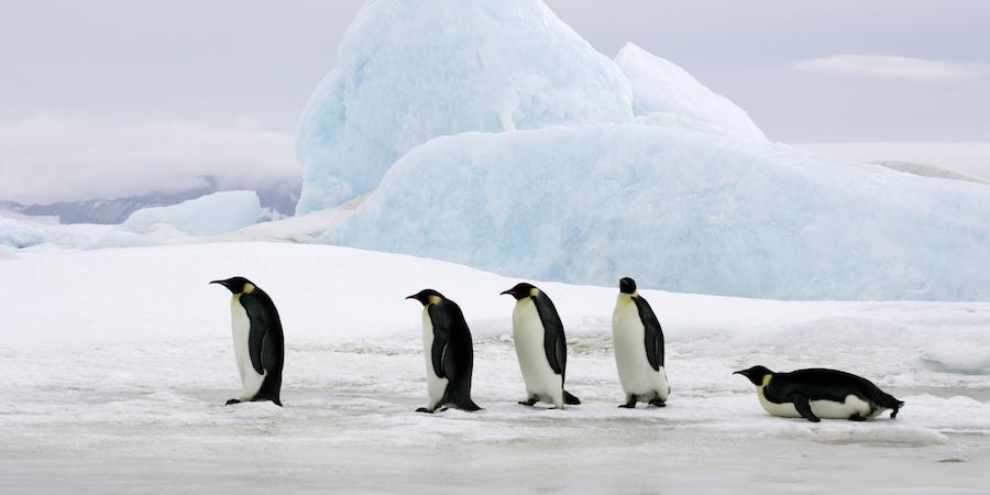 Penguins_on_ice