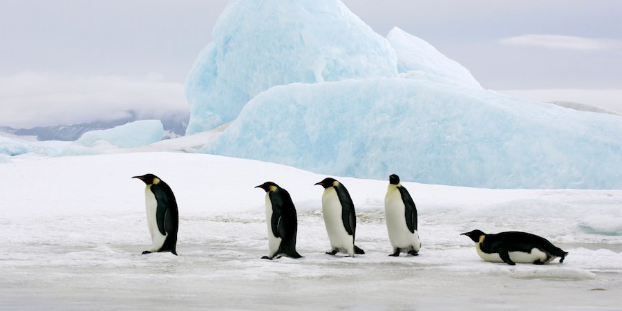 Penguins_on_ice