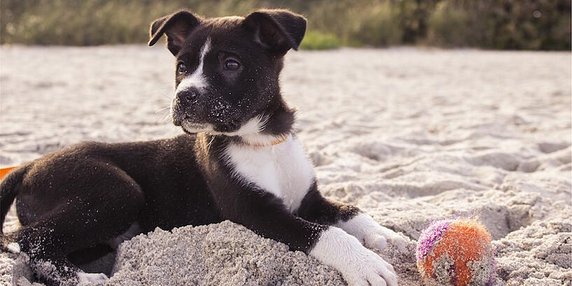 dog-playing-in-sand