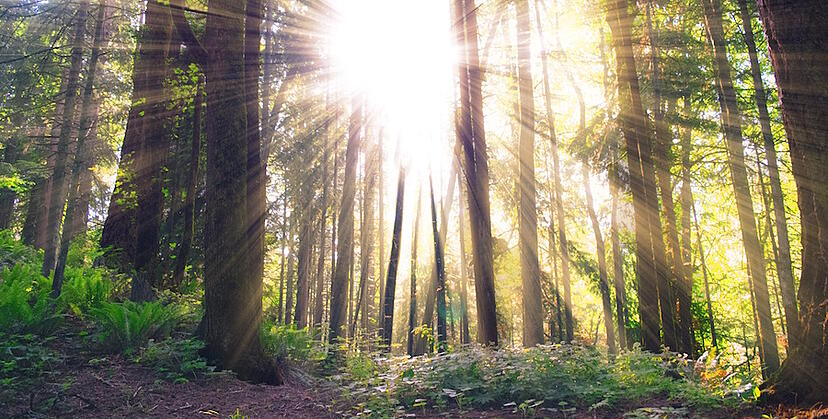 Sunlight_in_Forest
